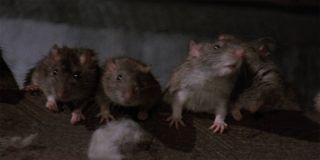 Graveyard Shift rats line up watching