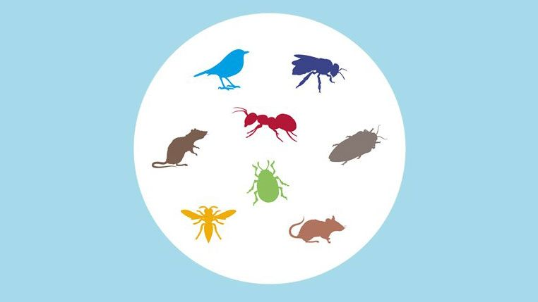 graphic of various household pests found in the home