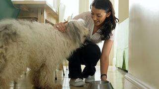 A woman feeding a shaggy dog the best dry dog food
