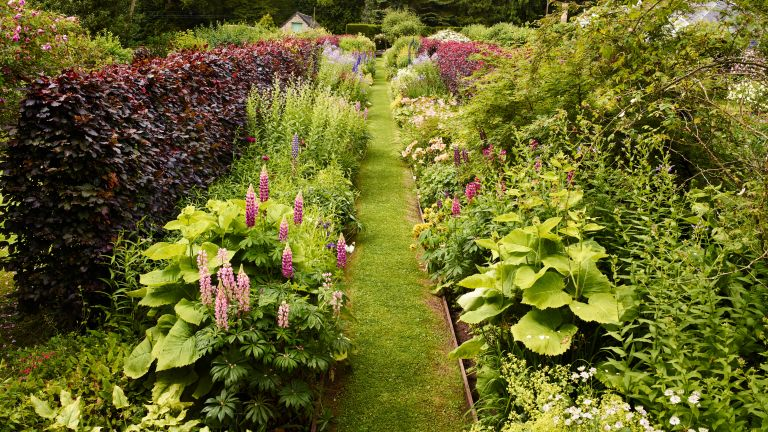 An example of how to plant a flower bed showing a flower and plant bed with borders of lupins, Inula, Campanula and meadowsweet
