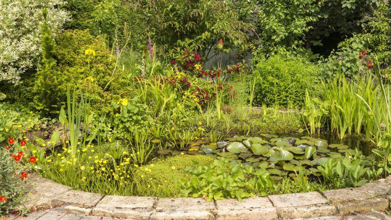 pretty brick-edged garden pond filled with the best pond plants