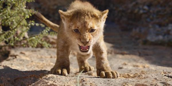 Young Simba in live-action Lion King 2019