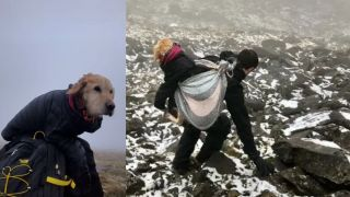 Lost dog being carried down Wicklow Mountains