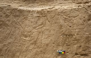 Hieroglyphics found at El-Khawy in Egypt show two storks, back to back, with an ibis between them (left), as well as a bull's head (right).