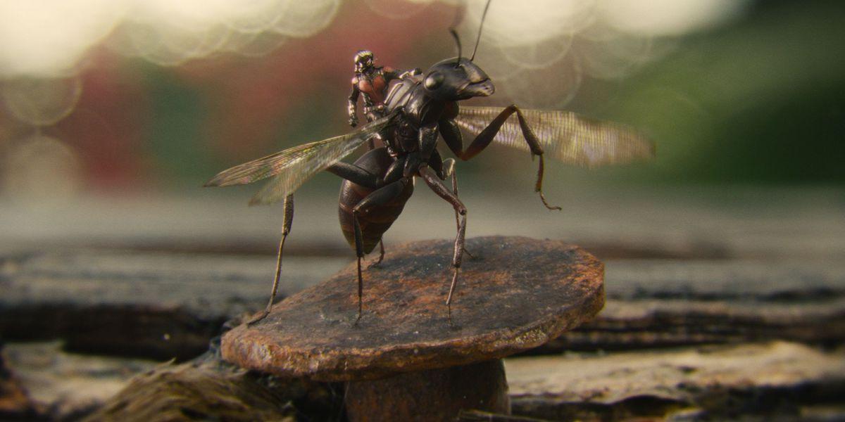 Ant-Man riding ant