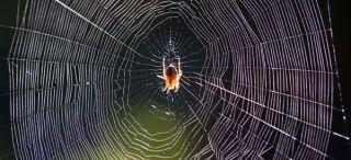 spider-web-100512-02