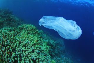 plastic bag floats over coral reef