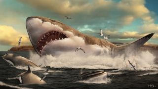 Megalodon, the biggest predatory shark of all time, watched over its young as many modern sharks do — by raising them in defined geographic areas known as nurseries.