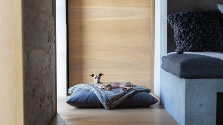 Best dog bed: Charley Chau Luxury Mattress Style Dog Bed