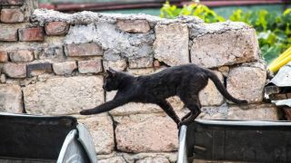 Cat jumps from burning building: black cat climbs building