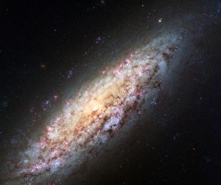 The spiral galaxy NGC 6503