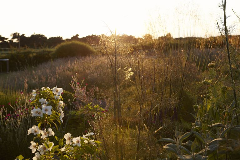 heatwave: garden with plants at sunset