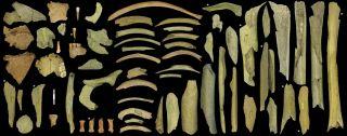 neanderthal-bones-cannibalism