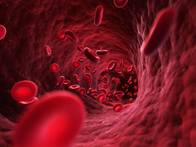 How Much Blood Is in the Human Body? | Live Science