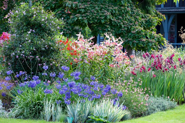 Cottage garden plants showing a colourful border