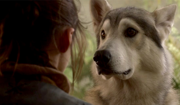 Maisie Williams as Arya with her dire wolf Nymeria on HBO's Game Of Thrones