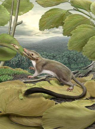hypothetical mammal ancestor