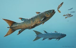 The fast-swimming rebellatrix coelacanth