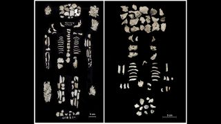 The remains of the elite woman (left) and twin fetuses (right) were cremated, but some of their bones (above) weren't completely burned.