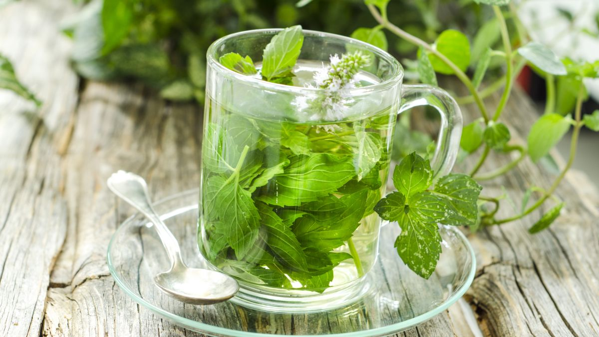 How to grow your own herbal tea: guide to creating a tea garden