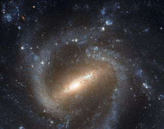 The barred spiral galaxy NGC 1073 is seen in this image from the Hubble Space Telescope.