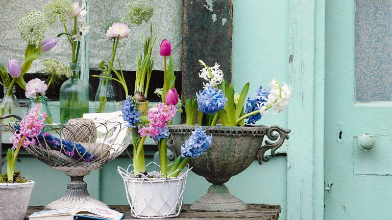 spring garden ideas: potted plants