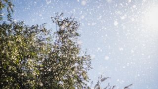 Coronavirus symptoms vs seasonal allergies: An allergist explains the difference