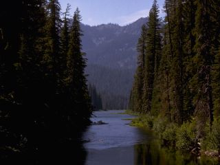 North Cascades River and Forest wallpaper