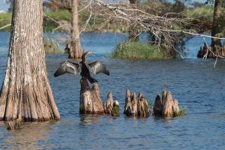 Louisiana wetlands.