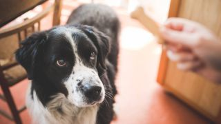 do dog treats expire?