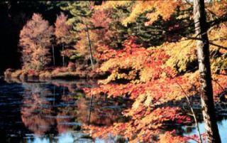 maple-trees-110909-02