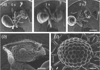 Insect nanosuits