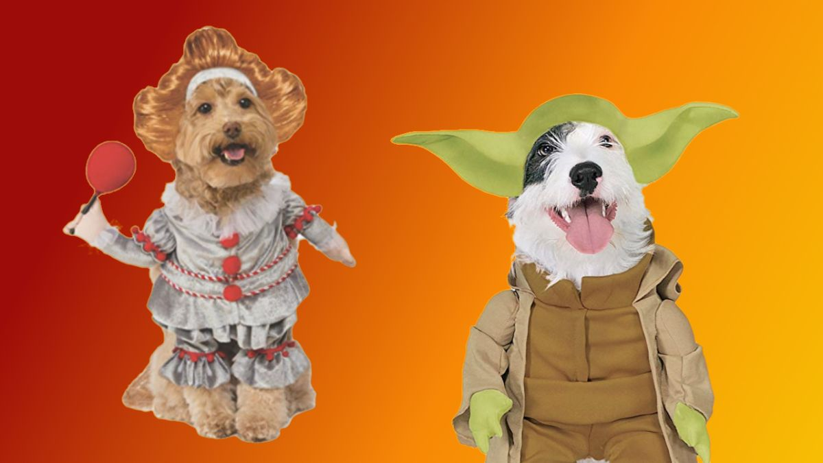 Turn your dog into Star Wars' Yoda, Harley Quinn or, um, Pennywise this Cyber Monday