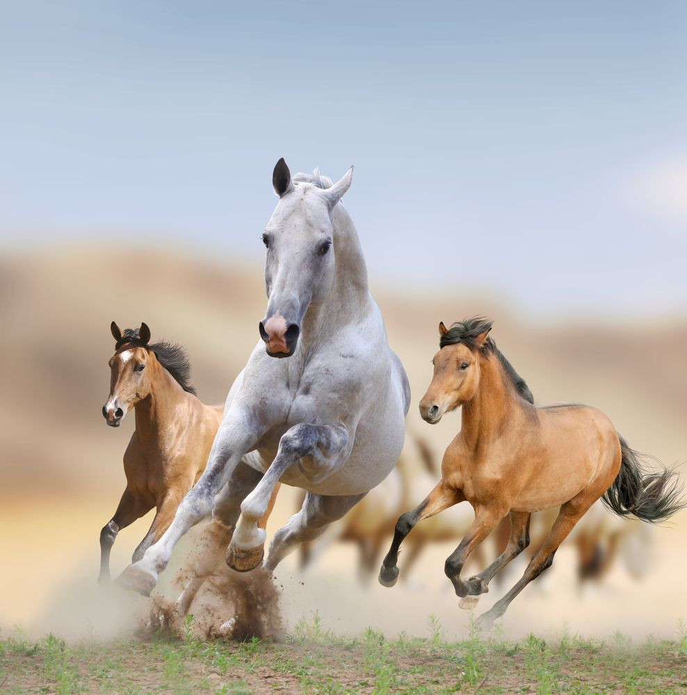 1 Man 1 Horse Video Link mustangs: facts about america's wild horses | live science