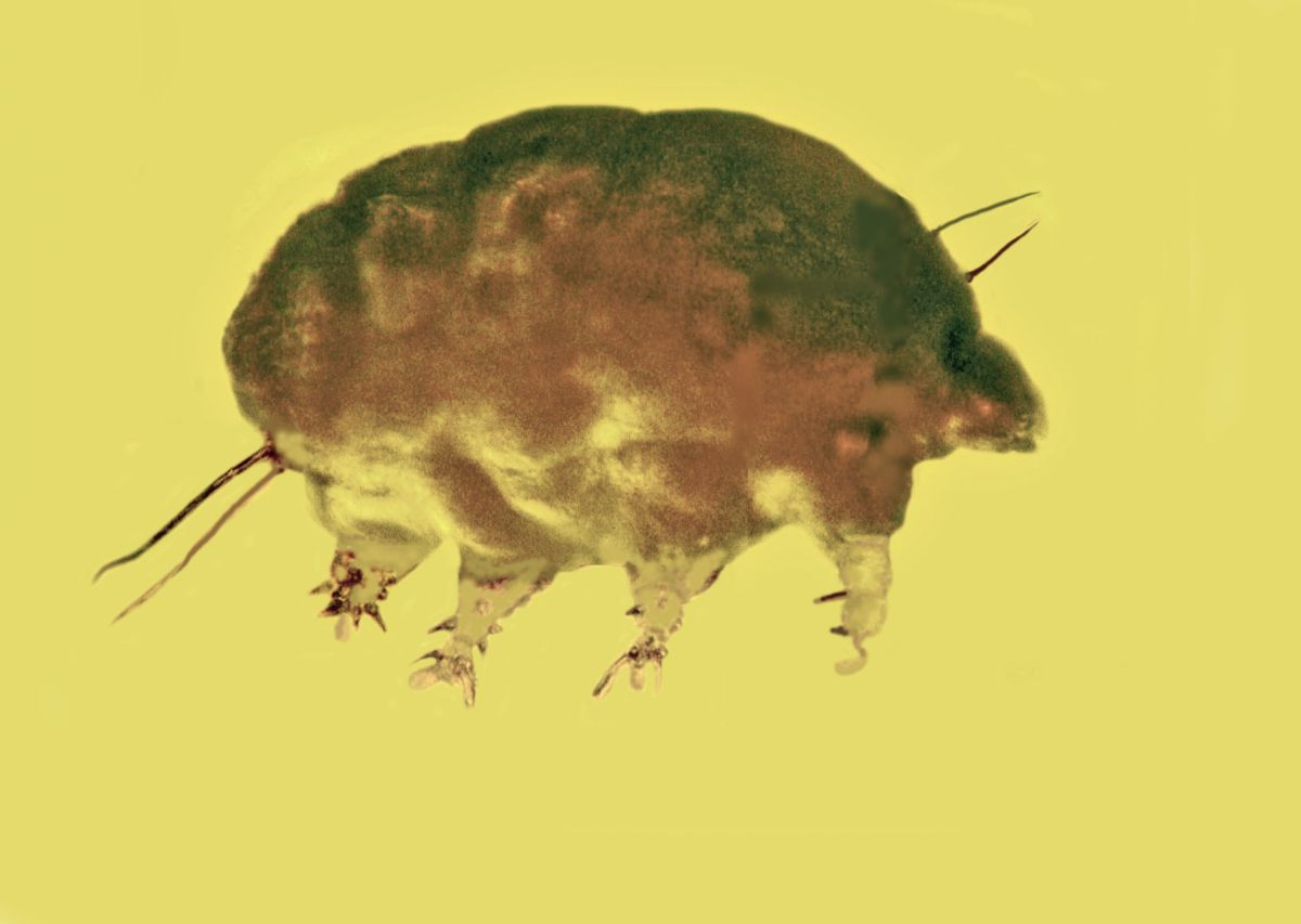Move Over, Tardigrades — 'Mold Pigs' Are the New Micro-Beast in Town