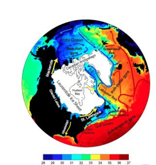 Model of changes in ocean salinity from massive Arctic flood