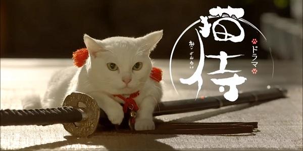 Cat Neko Samurai