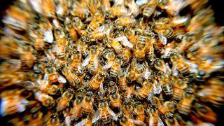 Bees! Beeeeeeeeeeeeeees!