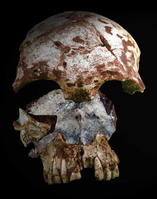 Old skulls from modern humans in Asia