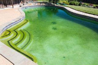 swimming pool with algae