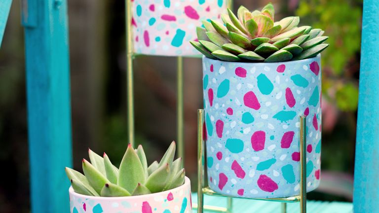 Decorated pots with succulents