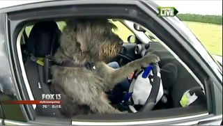 screenshot of dog driving car