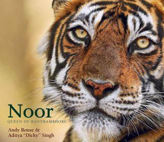 Noor: Queen of Ranthambhore features 200 images of Indian tigers in Rajasthan