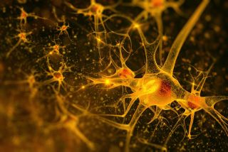 Neurons Illustration