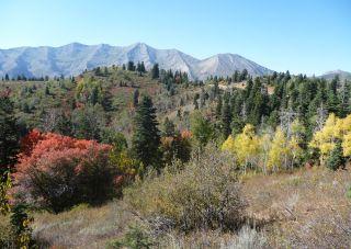 Fall foliage Utah
