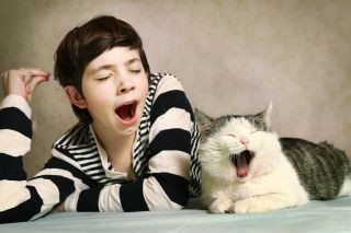 A boy and a cat yawning.