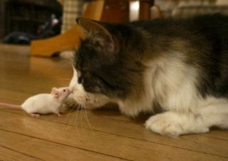 a cat and mouse on friendly terms