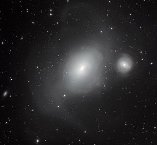 Contrasting Galaxies NGC 1316 and 1317