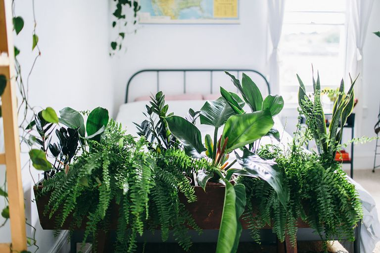 indoor garden ideas: plants from botanica studio dividing bedroom