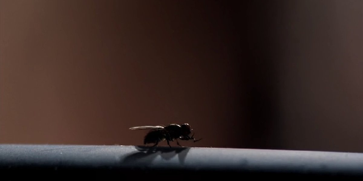 """The said fly in the episode """"Fly"""" on Breaking Bad."""